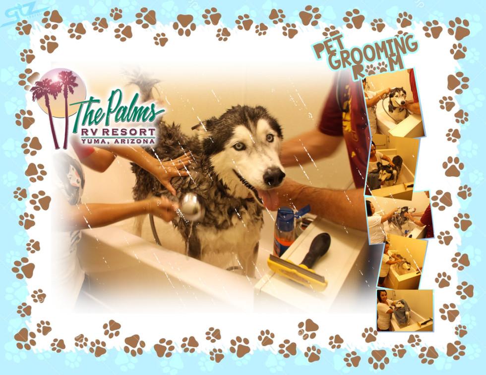 Palms Pet grooming Room